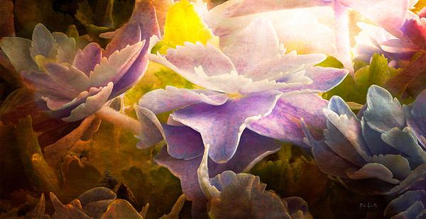Baby Hydrangeas Print by Bob Orsillo