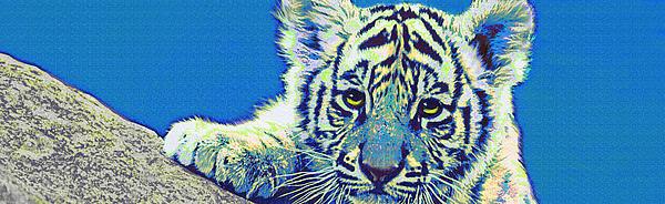 Baby Tiger- Blue Print by Jane Schnetlage