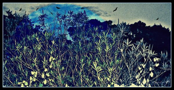 Back Yard Sky Print by YoMamaBird Rhonda