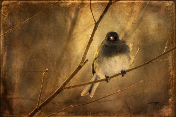 Backlit Birdie Being Buffeted  Print by Lois Bryan