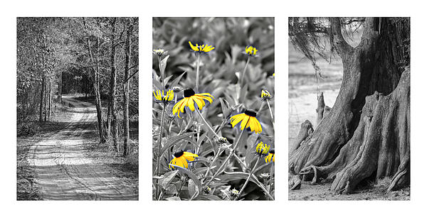 Backwoods Escape Triptych Print by Carolyn Marshall