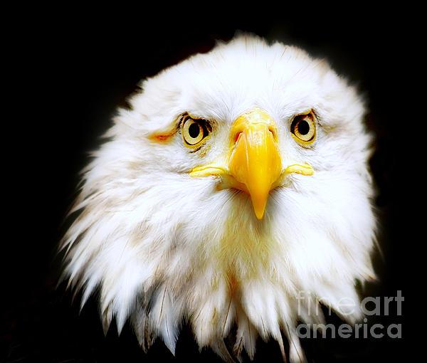 Bald Eagle Print by Photodream Art