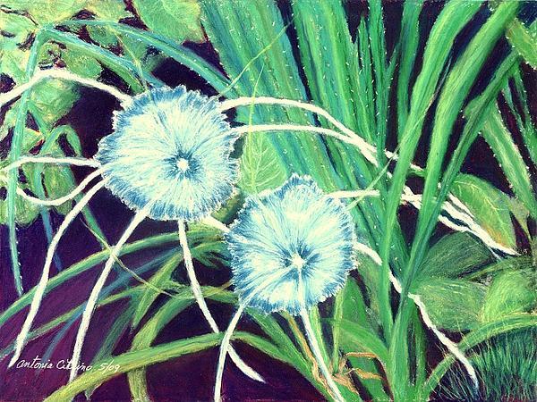 Bali White Spider Lily's  Pastel Print by Antonia Citrino