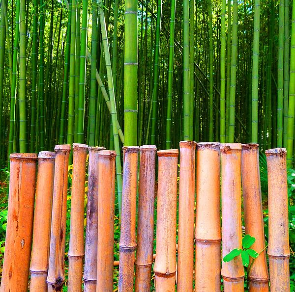 Bamboo Fence Print by Julia Ivanovna Tanner