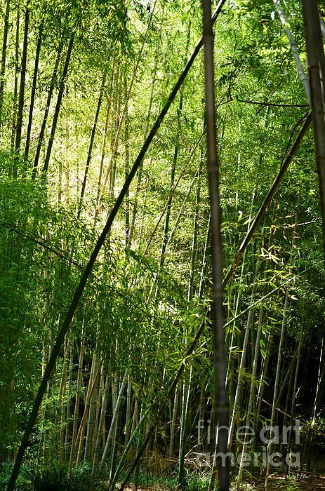 Maria Urso  - Bamboo Forest