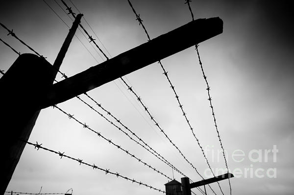 Barbed Wire Fence Print by Michal Bednarek