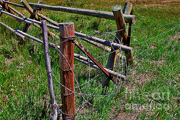 Barbed Wire Print by Janice Rae Pariza