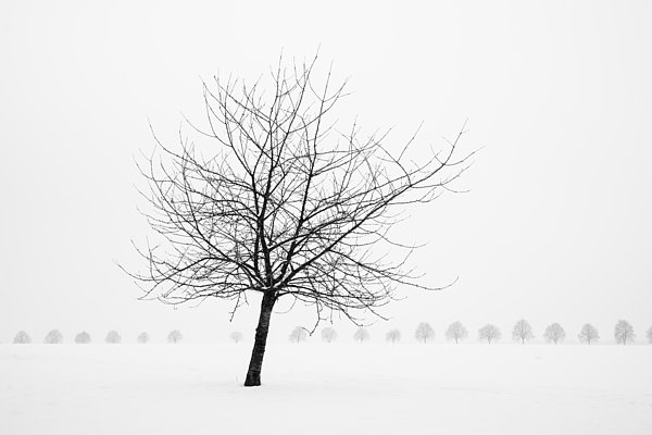 Bare Tree In Winter - Wonderful Black And White Snow Scenery Print by Matthias Hauser