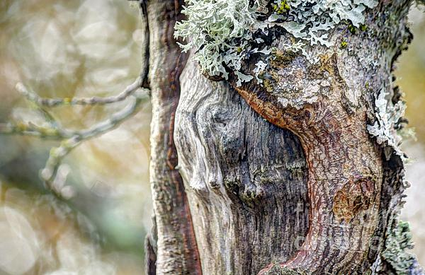 Bark And Bokeh Print by Chris Anderson