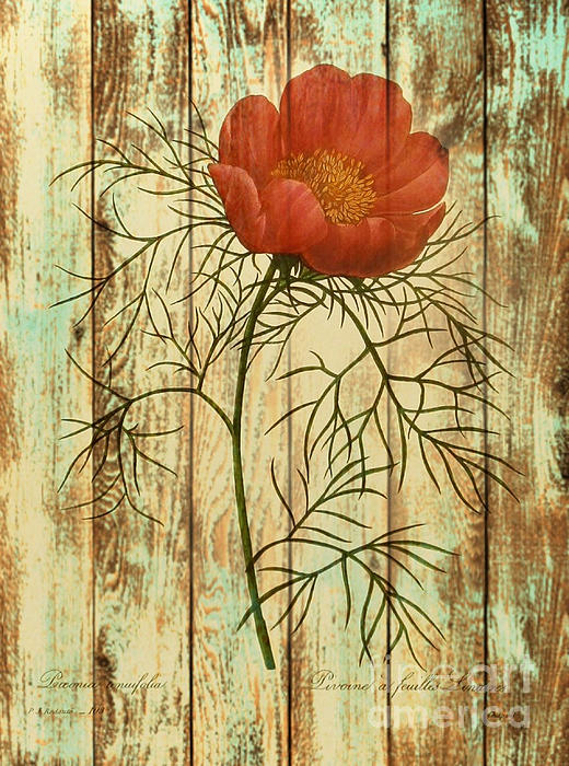 Barn Wood Texture Poppy Flower Botanical Art Print by Cranberry Sky