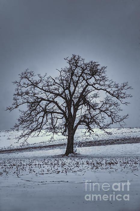 Barren Winter Scene With Tree Print by Dan Friend