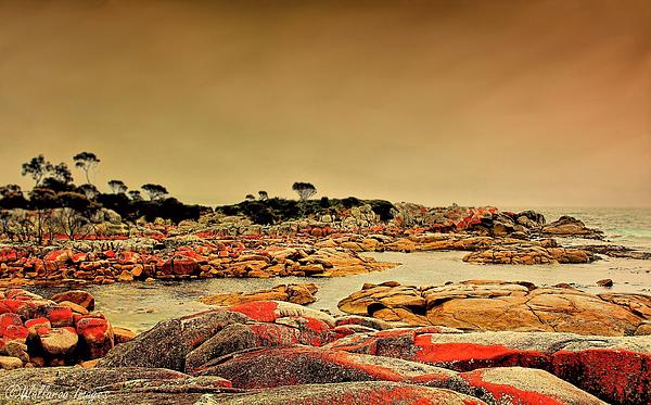 Wallaroo Images - Bay of Fires 1