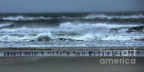 Beach Feast - Outer Banks Ocracoke Print by Dan Carmichael