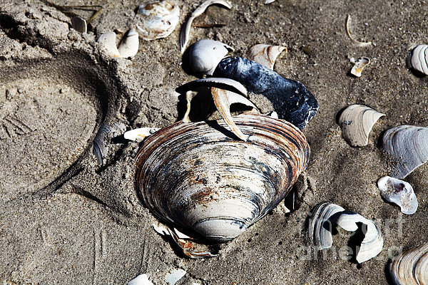 Beach Shells Print by John Rizzuto