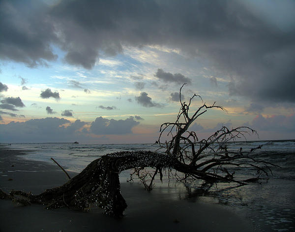Douglas Stucky - Beached Tree