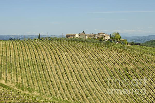 Beautiful Chianti Region In Tuscany Print by Patricia Hofmeester