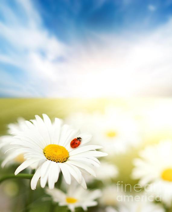 Beautiful Ladybug And Beautiful Flower Print by Boon Mee