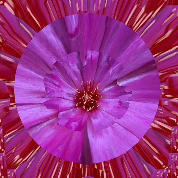 Navin Joshi - Beautiful Purple WILD CACTUS Flower Art placed on Signature Style luxury patterns designed by NavinJ
