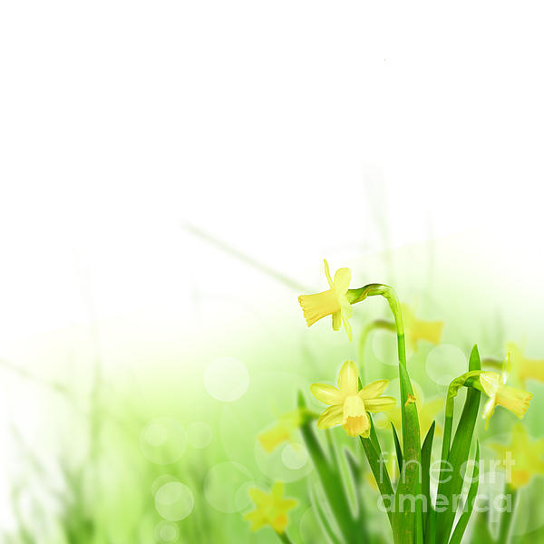 Beautiful Spring Flowers Print by Boon Mee