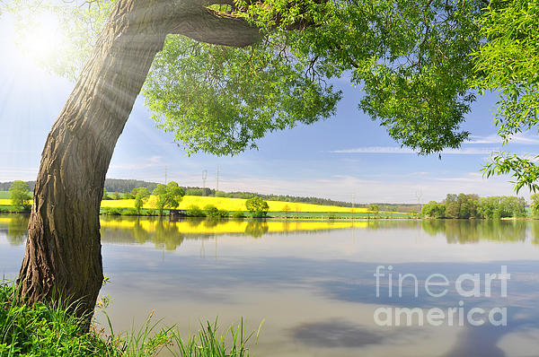 Beautiful Spring Landscape Print by Boon Mee
