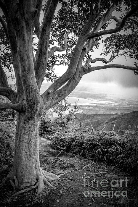 Beautiful Tree Looking Down On A Tropical Valley Print by Edward Fielding
