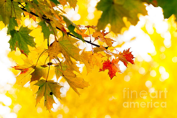 beauty Autumn Leaves Print by Boon Mee