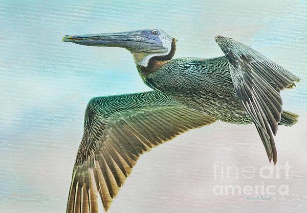 Deborah Benoit - Beauty Of The Pelican
