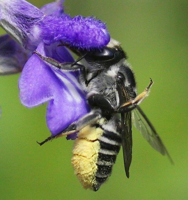 Myrna Bradshaw - Bee-licious Flower