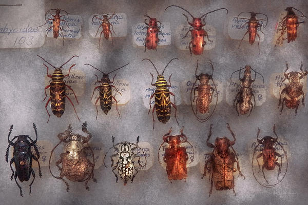 Beetles - The Usual Suspects  Print by Mike Savad