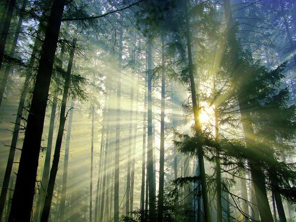Diane Schuster - Behold The Light