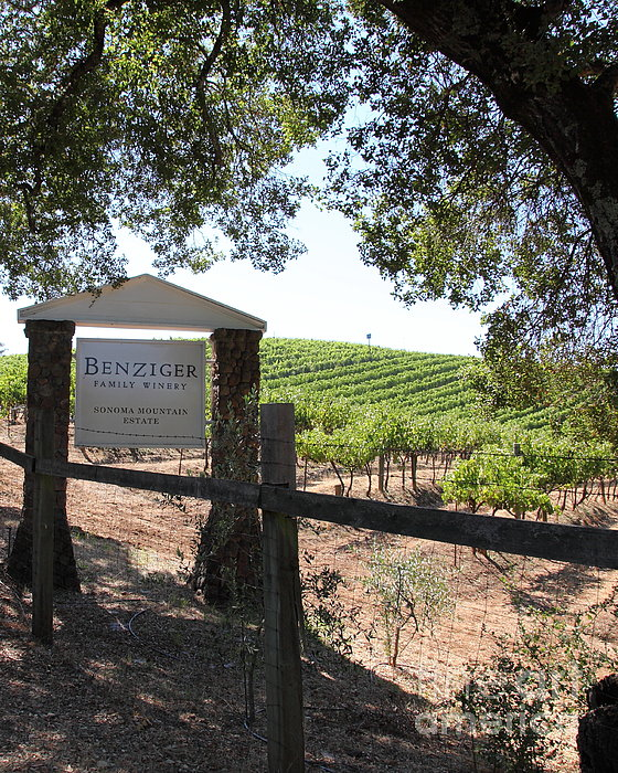 Benziger Winery In The Sonoma California Wine Country 5d24592 Vertical Print by Wingsdomain Art and Photography