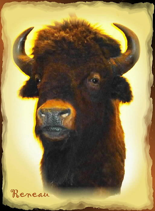 Big Game Trophy - Buffalo Print by Sadie Reneau