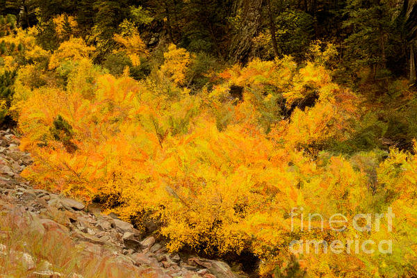 Big Thompson River - 9 Print by Jon Burch Photography