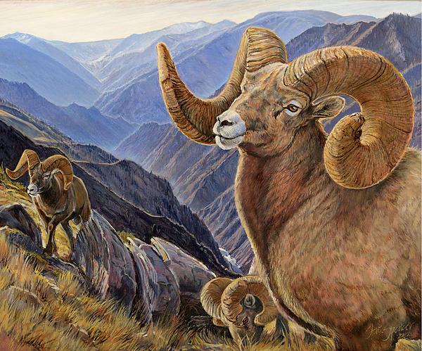 Bighorn Trio Print by Steve Spencer
