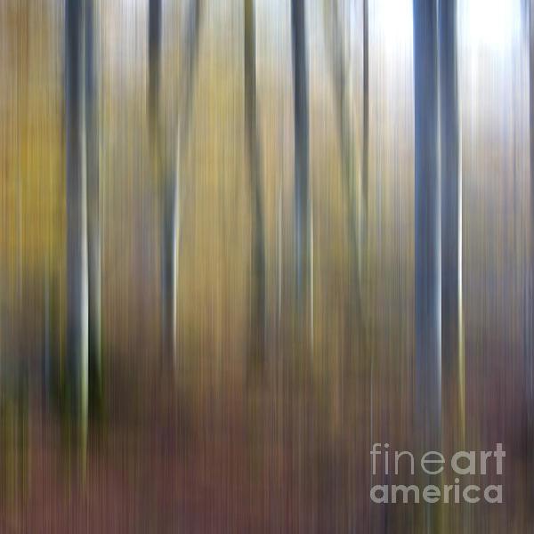 Birch Trees. Abstract. Blurred Print by Bernard Jaubert