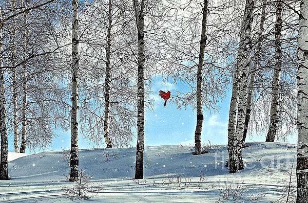 Birch Trees Print by Liane Wright
