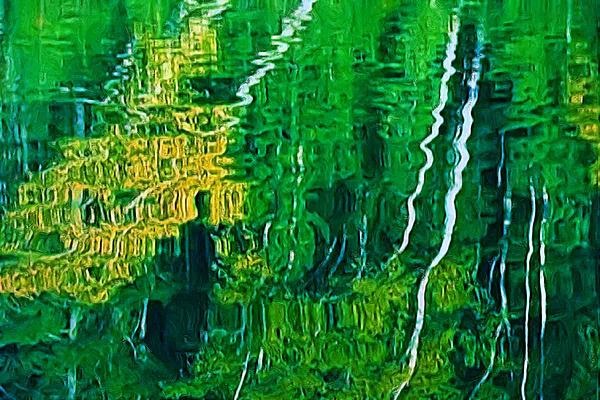 Birch Trees Reflection Print by Pat Now