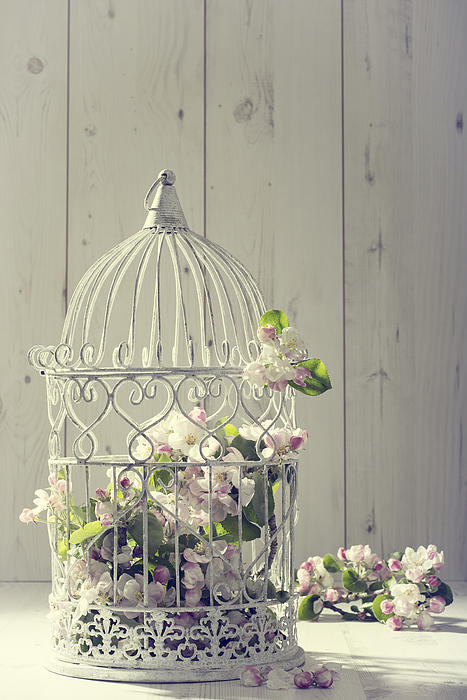 Bird Cage Print by Amanda And Christopher Elwell
