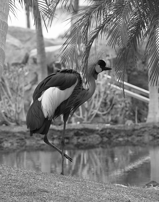 Athala Carole Bruckner - Bird In Paradise