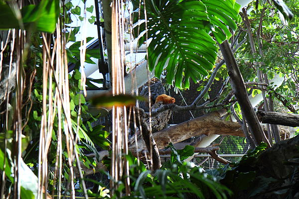 Bird - National Aquarium In Baltimore Md - 12121 Print by DC Photographer