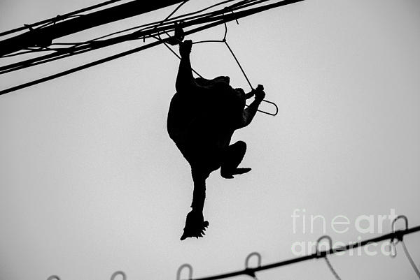 Bird On A Wire Print by Dean Harte