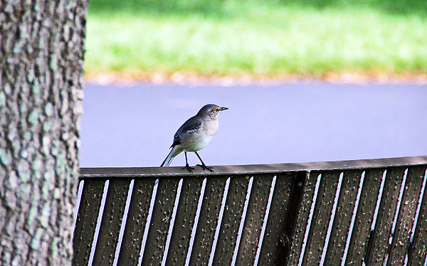 Bird On Bench Print by Aimee L Maher Photography and Art