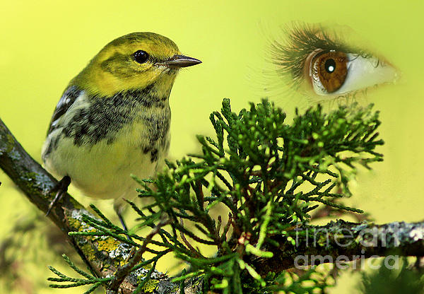 Bird Watching Print by Inspired Nature Photography By Shelley Myke