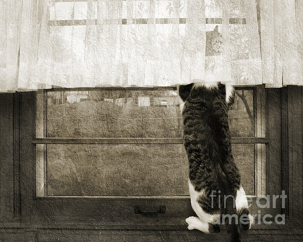 Andee Photography - Bird Watching Kitty Cat BW