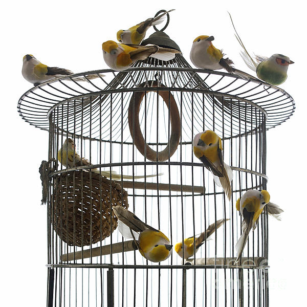 Birds Inside And Outside A Cage Print by Bernard Jaubert