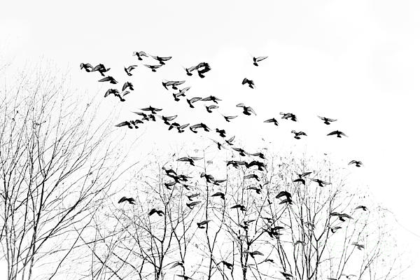 Birds Print by Kevin Barske