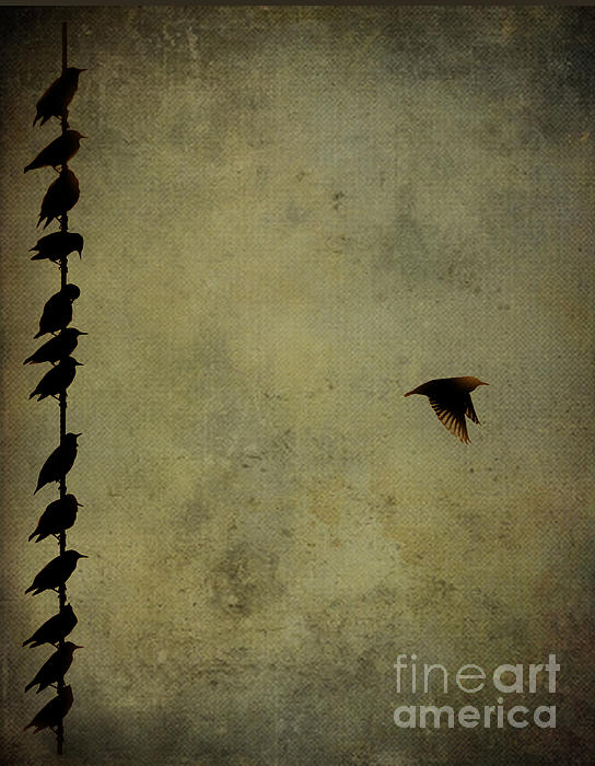 Birds On A Wire 2 Print by Jim Wright
