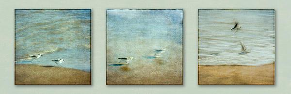 Eduardo Tavares - Birds Take Off Sequence