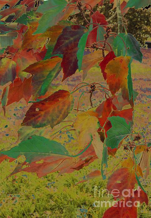 Adri Turner - Bizarre Leaves