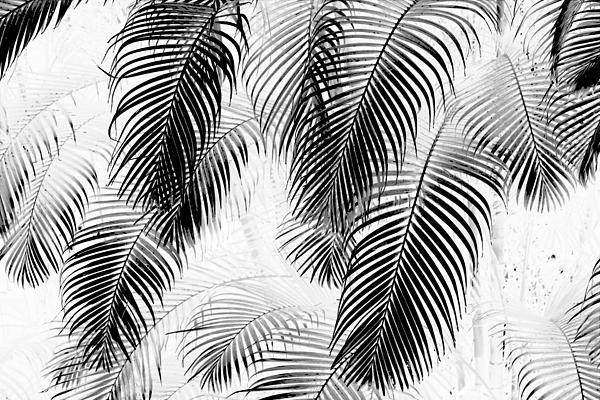 Black And White Palm Fronds Print by Karon Melillo DeVega